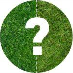 Une pelouse naturelle ou un gazon artificiel ? Comparatif
