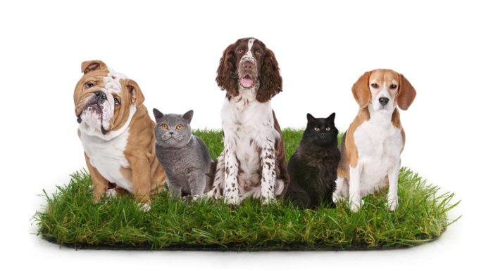 Le gazon artificiel est-il adapté aux animaux de compagnie ?